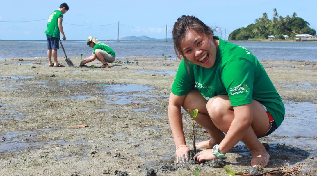 Mangrove seedlings being planted as part of conservation volunteer work abroad.